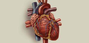Disfunção Erétil pode significar risco aumentado de eventos Cardiovasculares